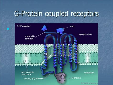 g protein coupled receptors c ppt indoleamines powerpoint presentation id 166600