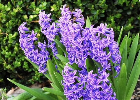 plant with purple flowers purple flower names and pictures beautiful flowers