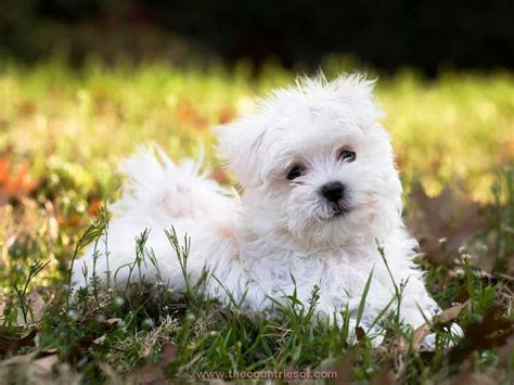 prettiest dogs who is the richest person in the world countries of the world