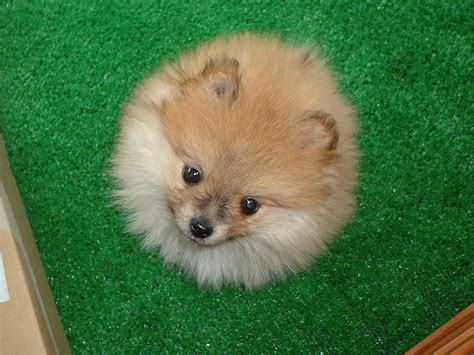 puffball puppy index of gis animals