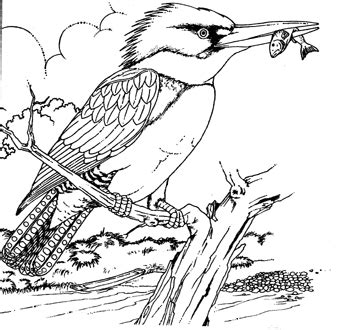 coloring pages kingfisher kingfisher coloring page coloring pages