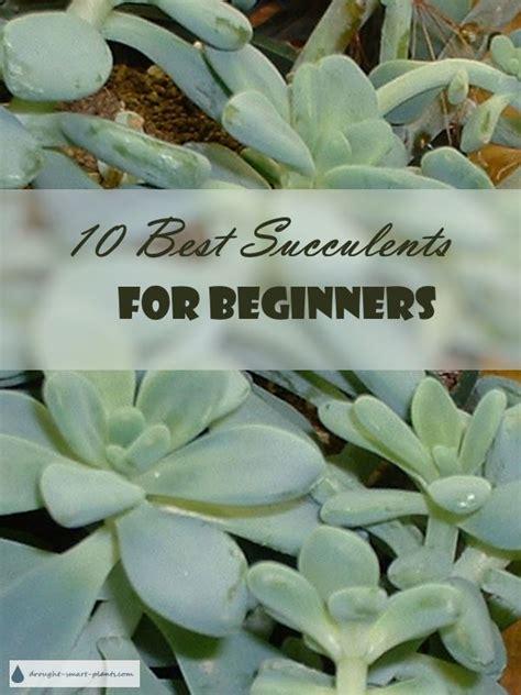 Beginner S Guide To Growing Succulents Garden - 10 best succulents for beginners which succulent should