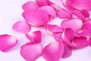 Image result for rose petal