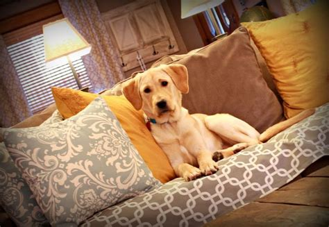 doggone couch cover best 25 dog couches ideas on pinterest