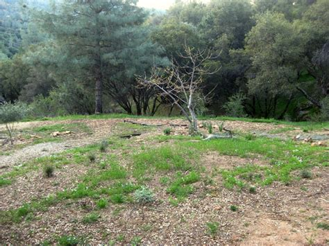 notes from the meadow user friendly deer resistant plant the wildflower meadow in may sierra foothill garden