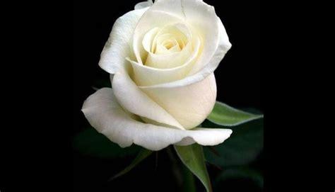 imagenes velas blancas hechizo para conquistar un amor imposible hor 243 scopo