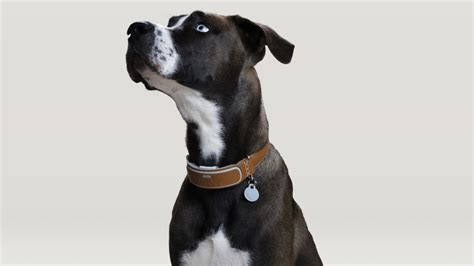 link akc smart collar innovations preis der ces die besten ideen der technik messe multimedia bild de
