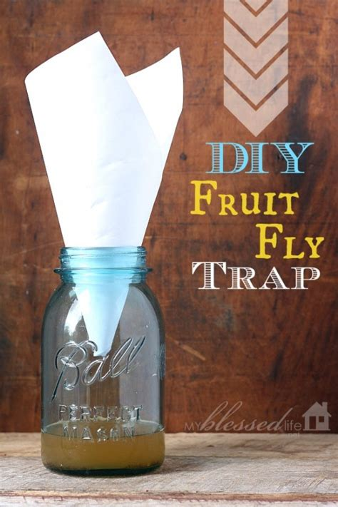 fruit fly trap diy get rid of fruit flies with a diy fruit fly trap