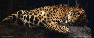 Jaguar Photography Animal Photography The Jaguar