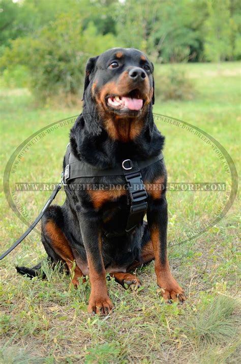 k9 search and rescue troubleshooting practical solutions to common search problems k9 professional series books sar weatherproof harness id patches rottweiler