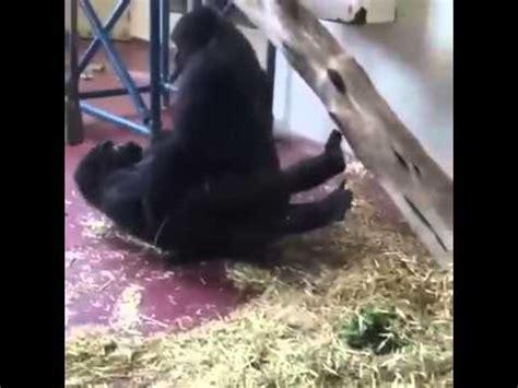 download video tutorial kawin full download mesum gorila di kebun binatang