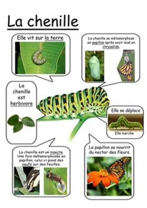 libro le chenille qui fait le cycle de vie du papillon avec les images du livre quot la chenille qui fait des trous quot d eric