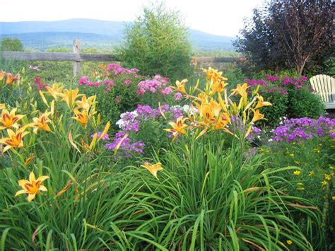 flowers and shrubs for sun 14 perennials for sun hgtv