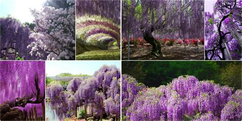 most beautiful flower gardens in the world the most beautiful gardens of the world
