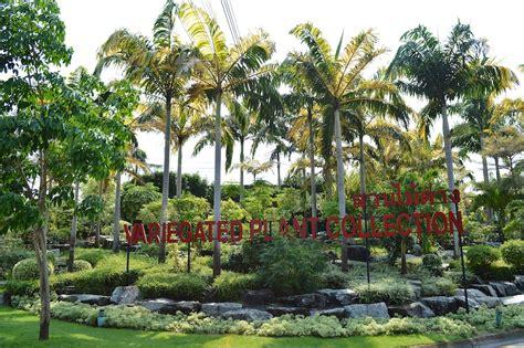 Nong Nooch Tropical Botanical Garden The Amazing Plants Of Nong Nooch Gardens