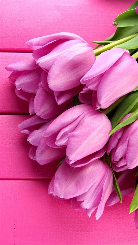 Rosas De Jardin #5: Tulip-720x1280-4k-hd-wallpaper-spring-flower-pink-3791.jpg