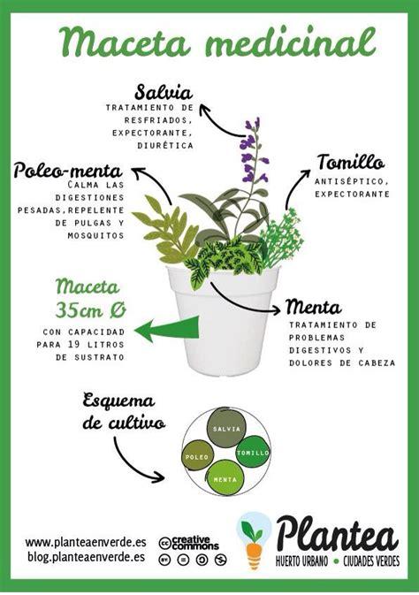 17 mejores ideas sobre flores caricatura en pinterest 17 mejores ideas sobre plantas en maceta en pinterest