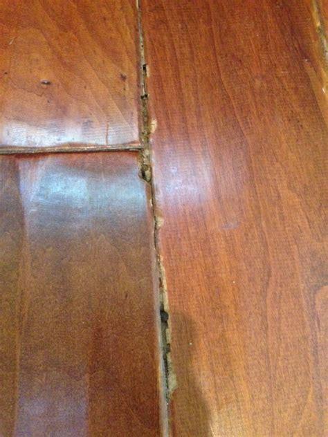 Termite Damage To Hardwood Floors by Termite Damage On Wood Floors Carpet Vidalondon