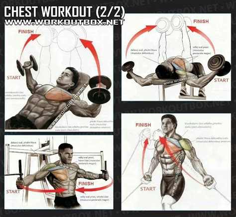alternative chest workout slimming