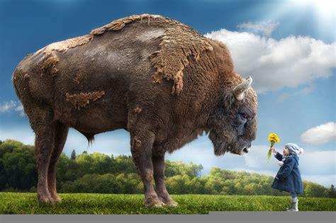imagenes de colas impresionantes impresionantes fotograf 237 as surrealistas de animales