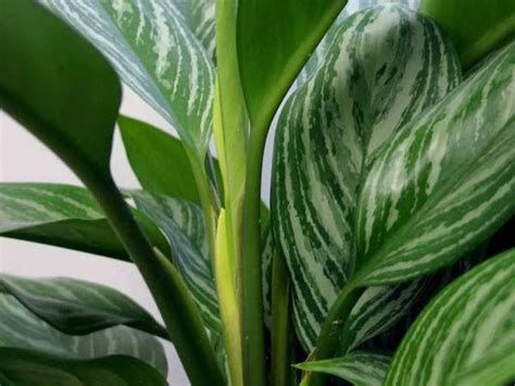 house plant identification how to identify green house plants hunker