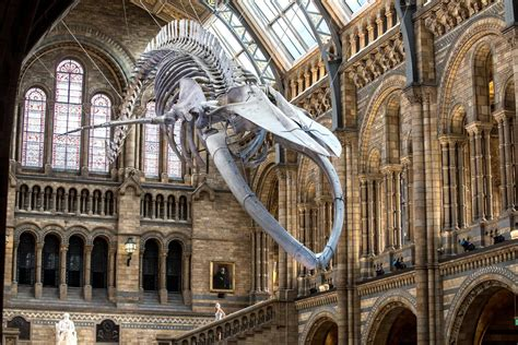 natural history museum unveils dippy  dinosaurs