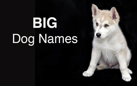 names for big dogs names great ideas for naming your puppy the happy puppy site