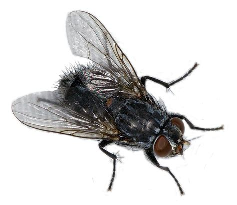 fly in the house house fly www pixshark com images galleries with a bite