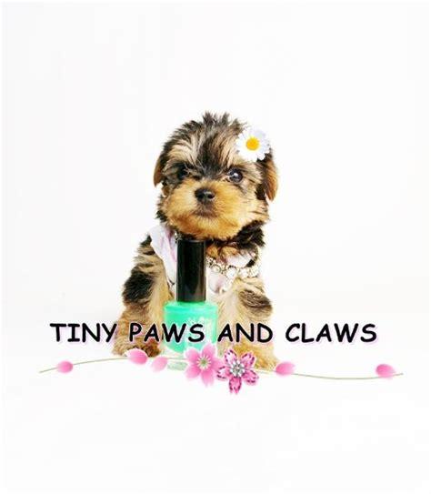 do yorkies dew claws tiny teacups