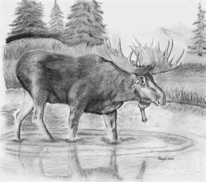 bull moose a walk in the pond by russ smith