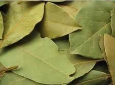 Rhea Bay Leaves Daun Bay manfaat daun salam bay leaf untuk kesehatan