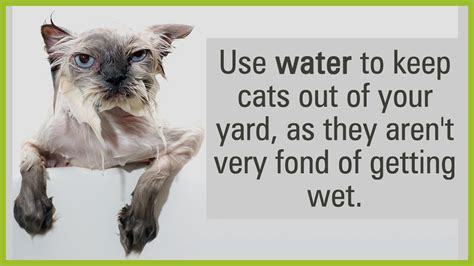 good ways to keep those pesky cats out of your yard
