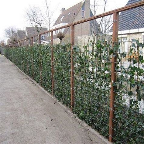 tuin hek metaal 30 cm hoog tuinartikelen markt nl tuinplanten