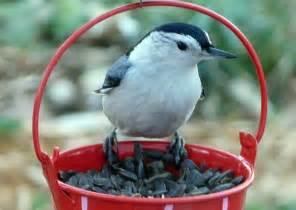 feeding backyard birds attracting birds feeding birds best birdseed