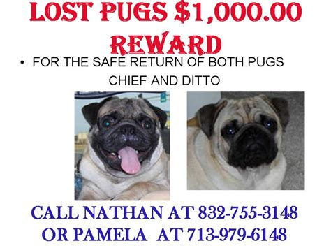 pug information ripoff report pughearts of houston complaint review alvin