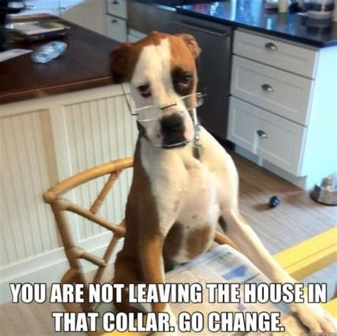 Kiss Me Dog Meme - 108 best images about funny dogs on pinterest funny