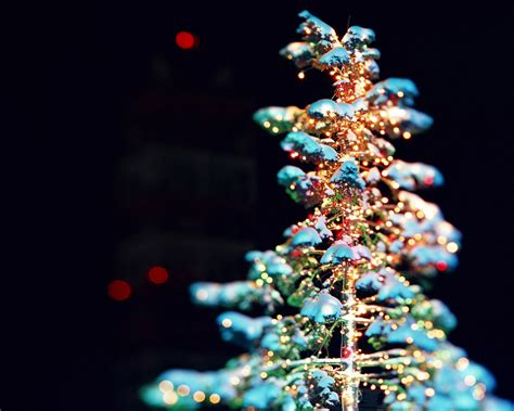 a beautiful christmas tree wallpapers hd wallpapers 17491