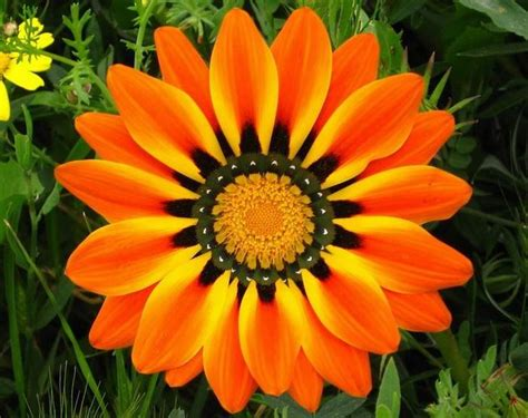 colorful flowers picture orange flowers in bloom light beautiful colorful flower photos nature babamail