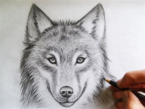 Sketches Wolf by 17 Best Ideas About Cool Wolf Drawings On Wolf