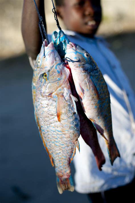 Fish String - ibo island lodge mobile dhow safari photos