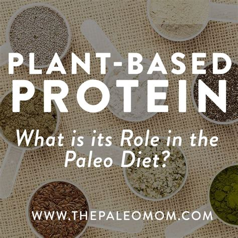 Paleo Based Detox Diet by Archives Collegetoday
