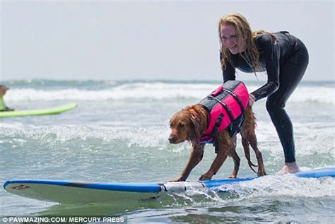 golden retriever autism golden retriever helps utees and children with autism surf daily mail