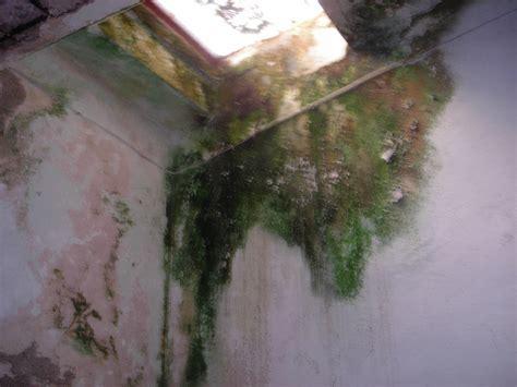 intonacare il soffitto intonacare soffitto fai da te offgrid