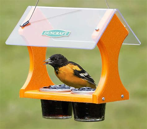 duncraft com grape jelly oriole feeder