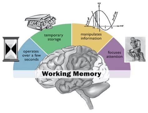 memory your brain the complete guide on how to improve your memory think faster concentrate more and remember everything books expand working memory your brain s bandwidth nextbrain