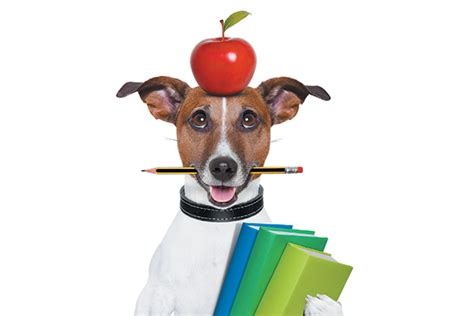 can dogs eat apple skin can dogs eat strawberries apples and grapes