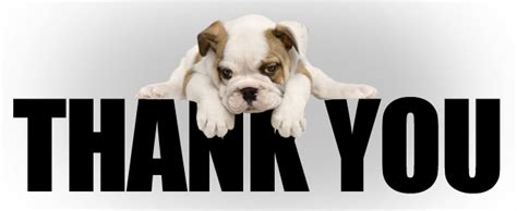 thank you puppy thank you my home i dogs