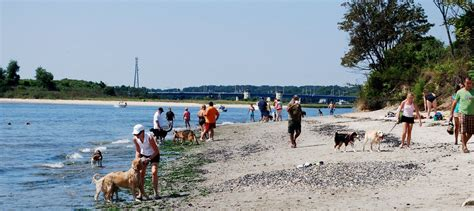 friendly beaches nj dogs to be restricted from near manasquan inlet opposition mounts