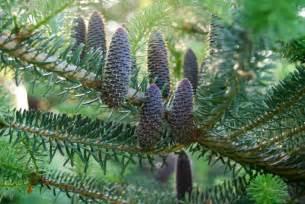 Types Of Garden Worms - best pine cones ever a way to garden