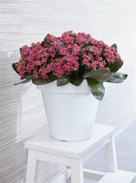flowering houseplants balcony garden web